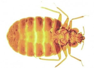 Bed Bug Control Lincolnshire