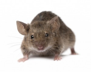 Pest Control lincolnshire